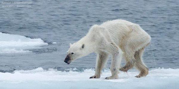 PolarBearDay