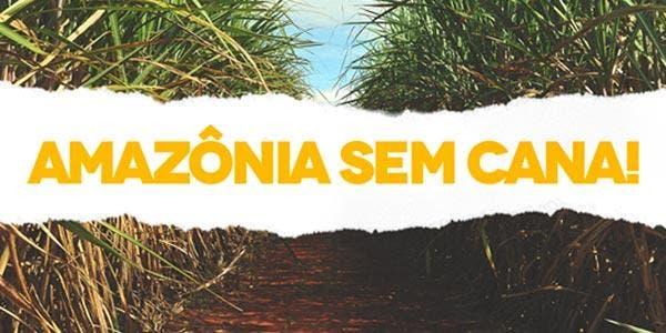 Cana-de-açúcar na Amazônia NÃO