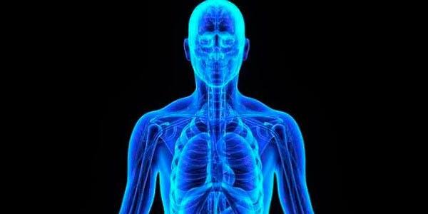 novo órgão do corpo humano