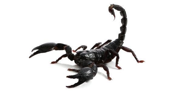 escorpião no sonho 2