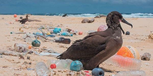 Ilha de plástico