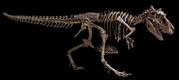 dinossauro rex 2
