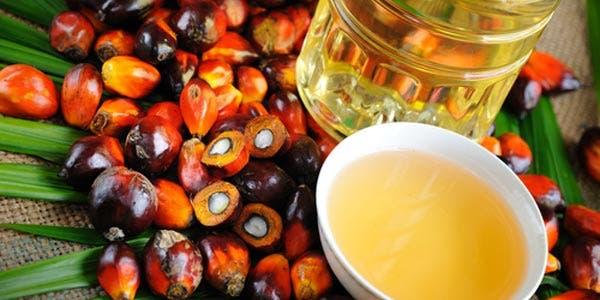 oleo palma