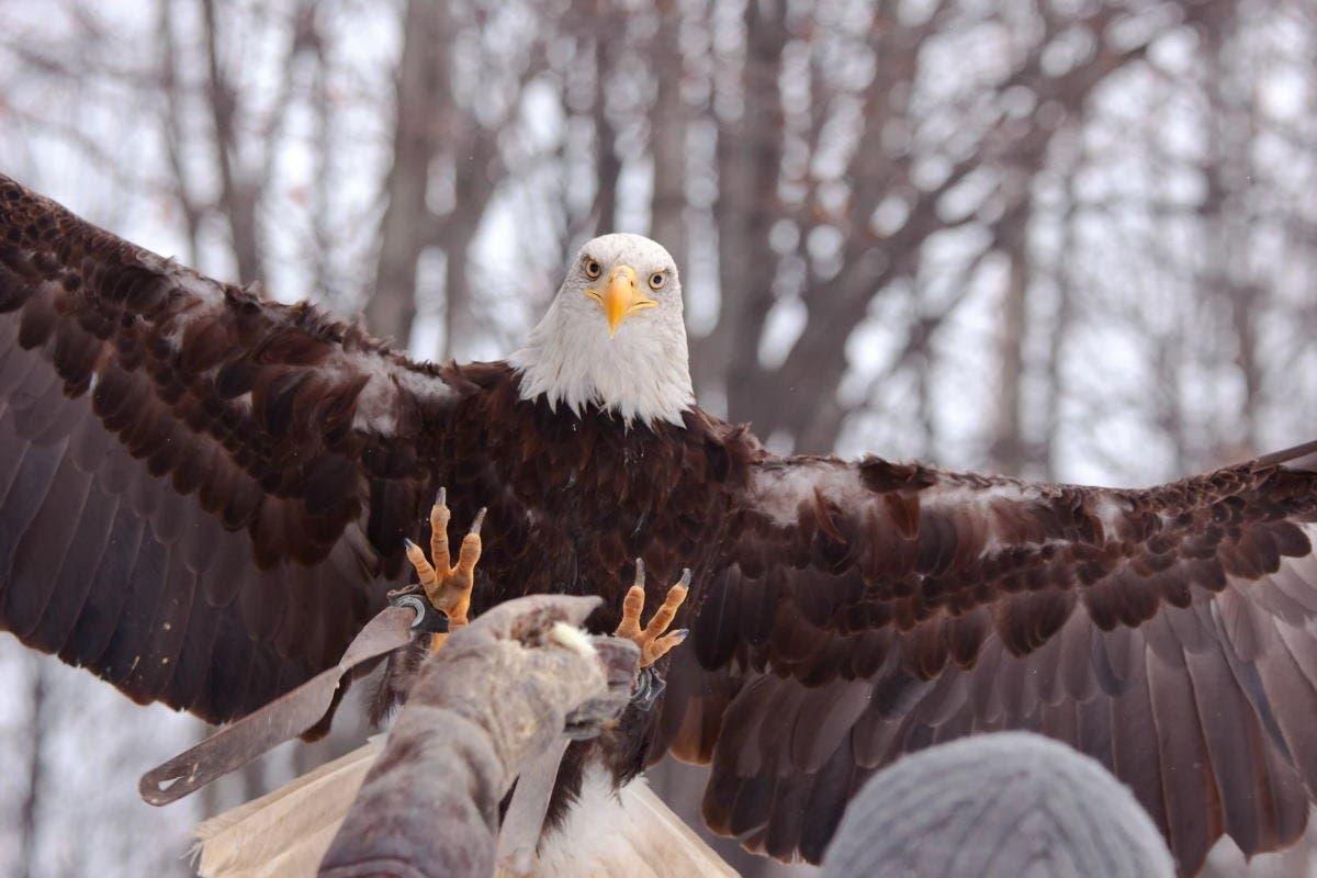aguia-simbologia