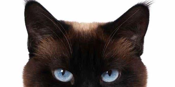 Olhar-gato