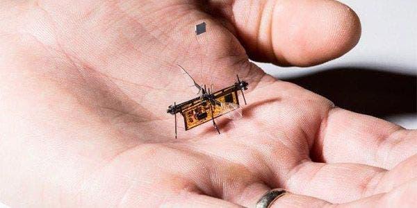 insetos robôs