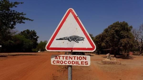bazoule crocodilos 5