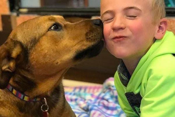Roman e seus cães