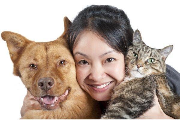 doenças cão e gato