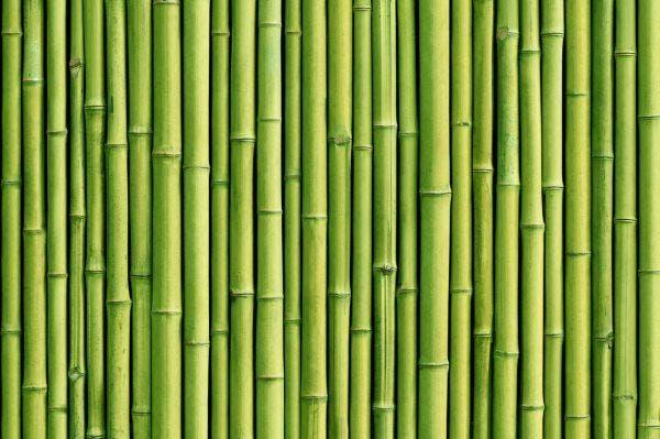 farinha de bambu