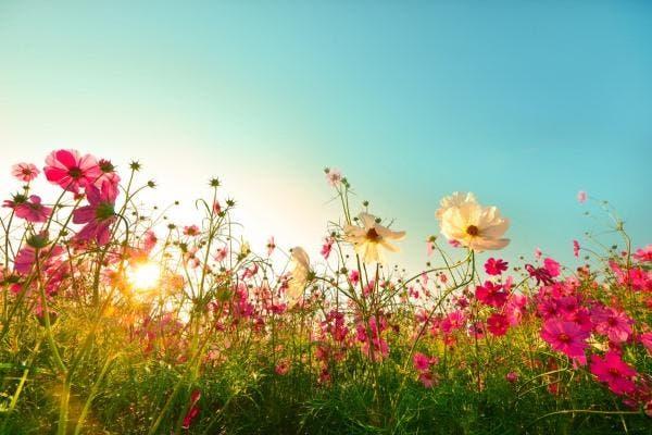 flores no campo