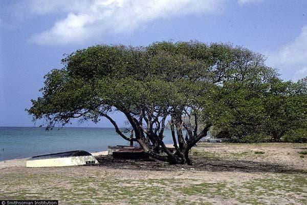 Árvore da morte