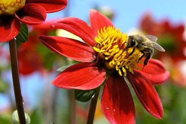abelhas-mel