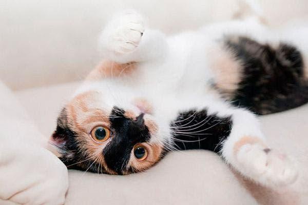 caráter-gato