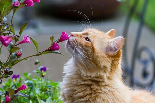 gatos-flores
