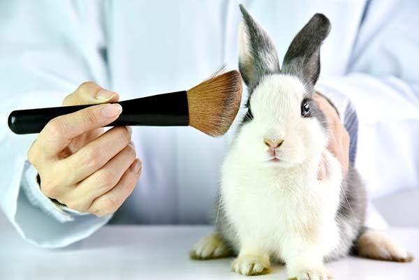 testes cosméticos em animais