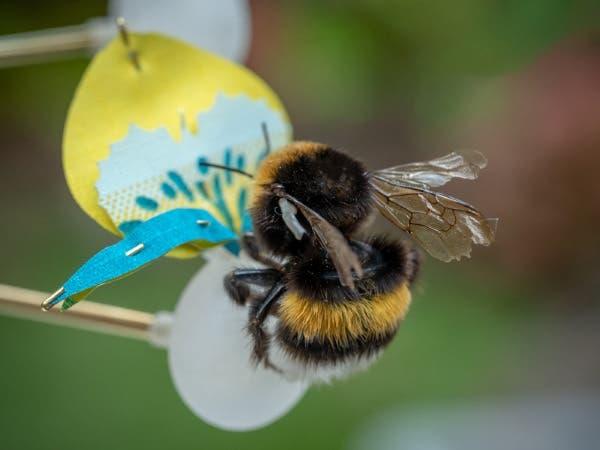 abelhas flores 3d 2