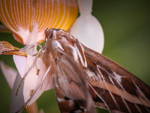 abelhas flores 3d 3