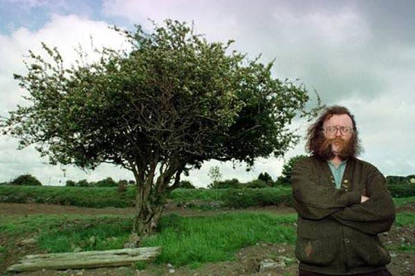 Fairy bush