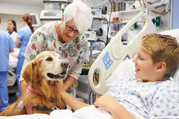 Animais de estimação nos hospitais