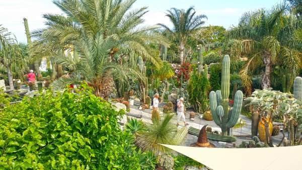 cactus ischia 2