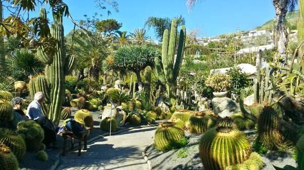 cactus schia