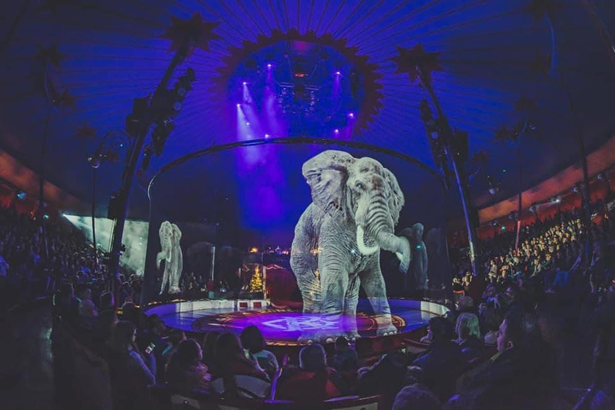 animais holográficos circo