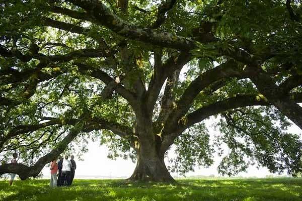 Direitos das Árvores