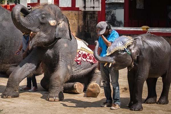 Dumbo Tailandia