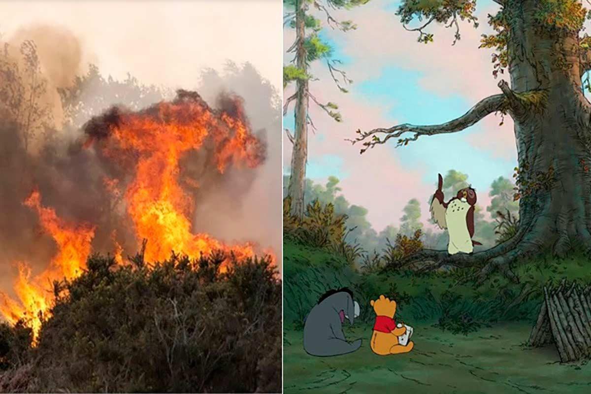 floresta Ursinho Puff