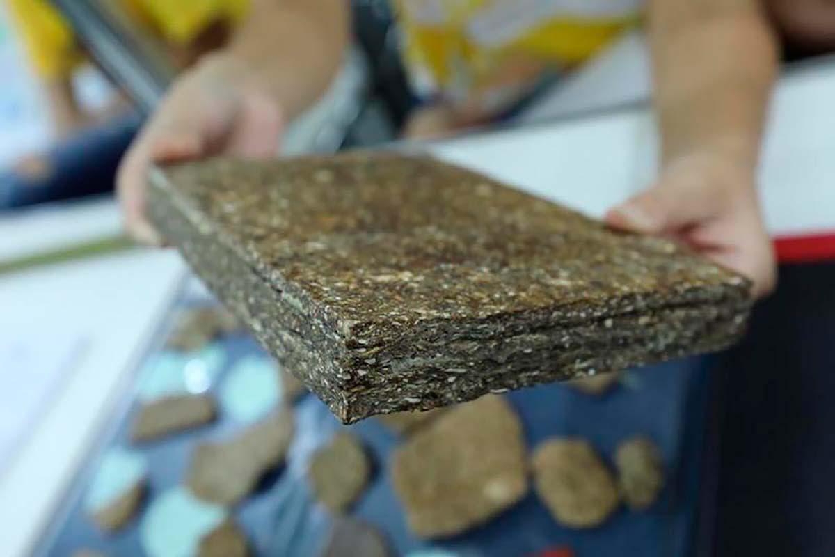 madeira mandioca