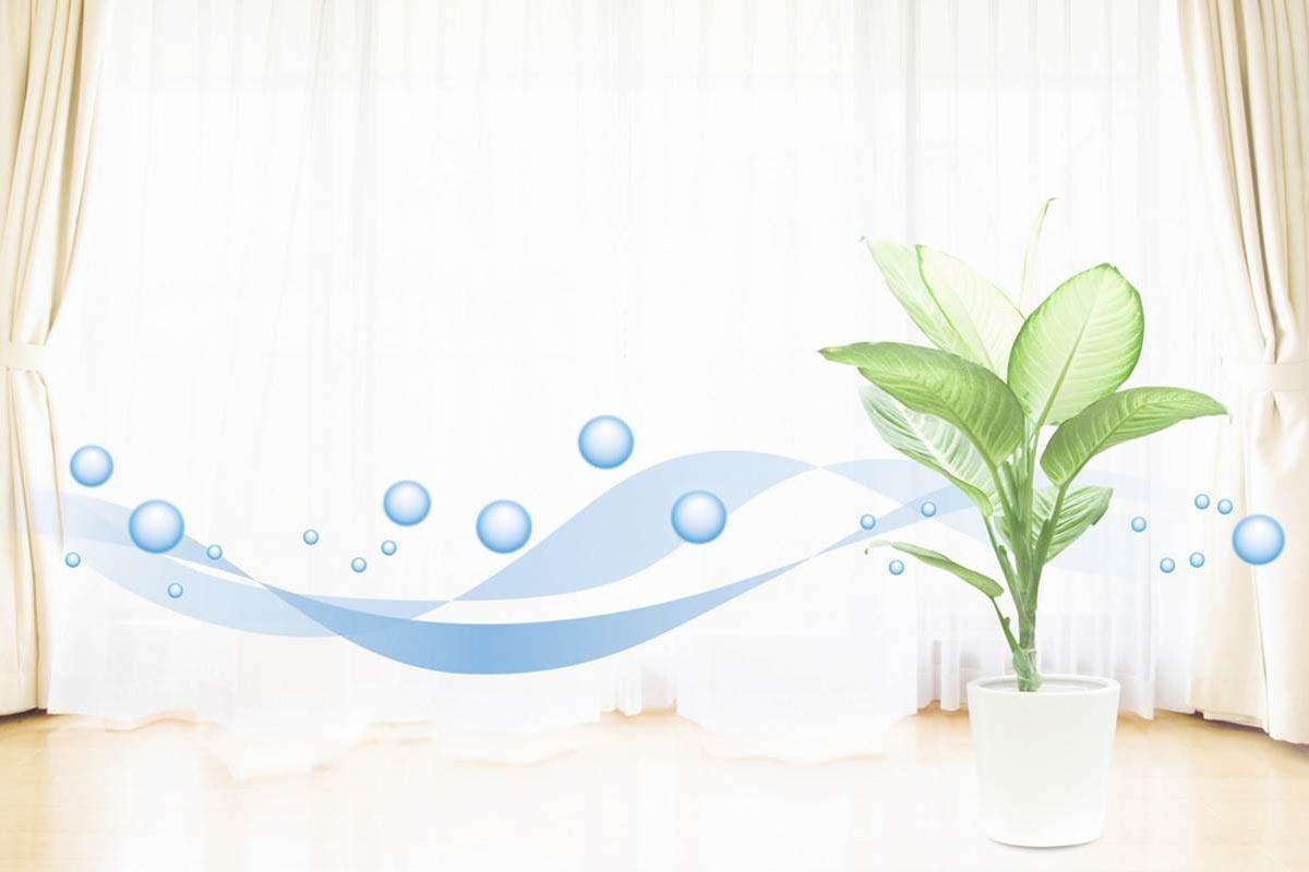 plantas purificam ar