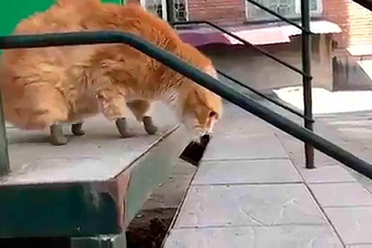 gato pata bionica