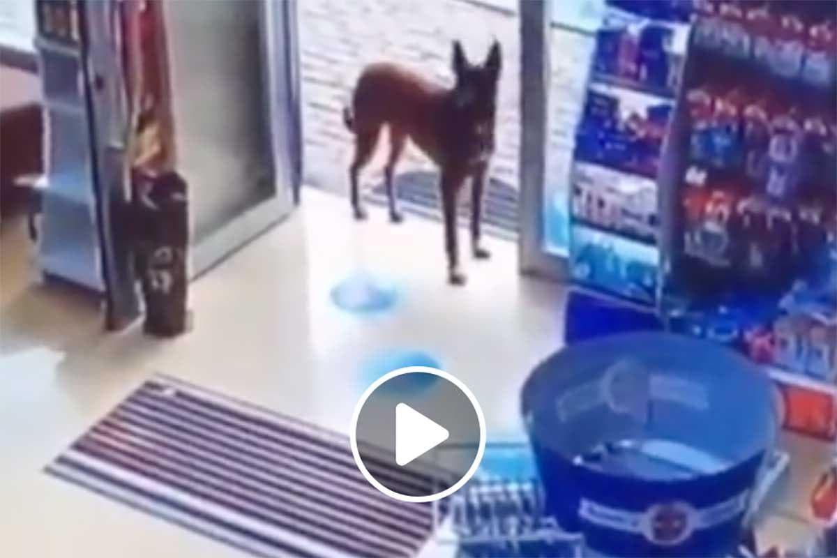 Vídeo mostra cãozinho