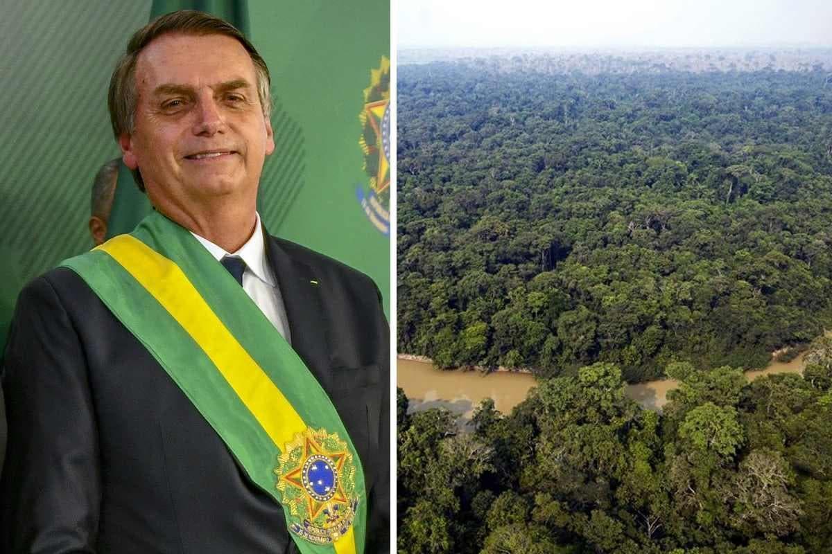 Desmatamento- Brasil
