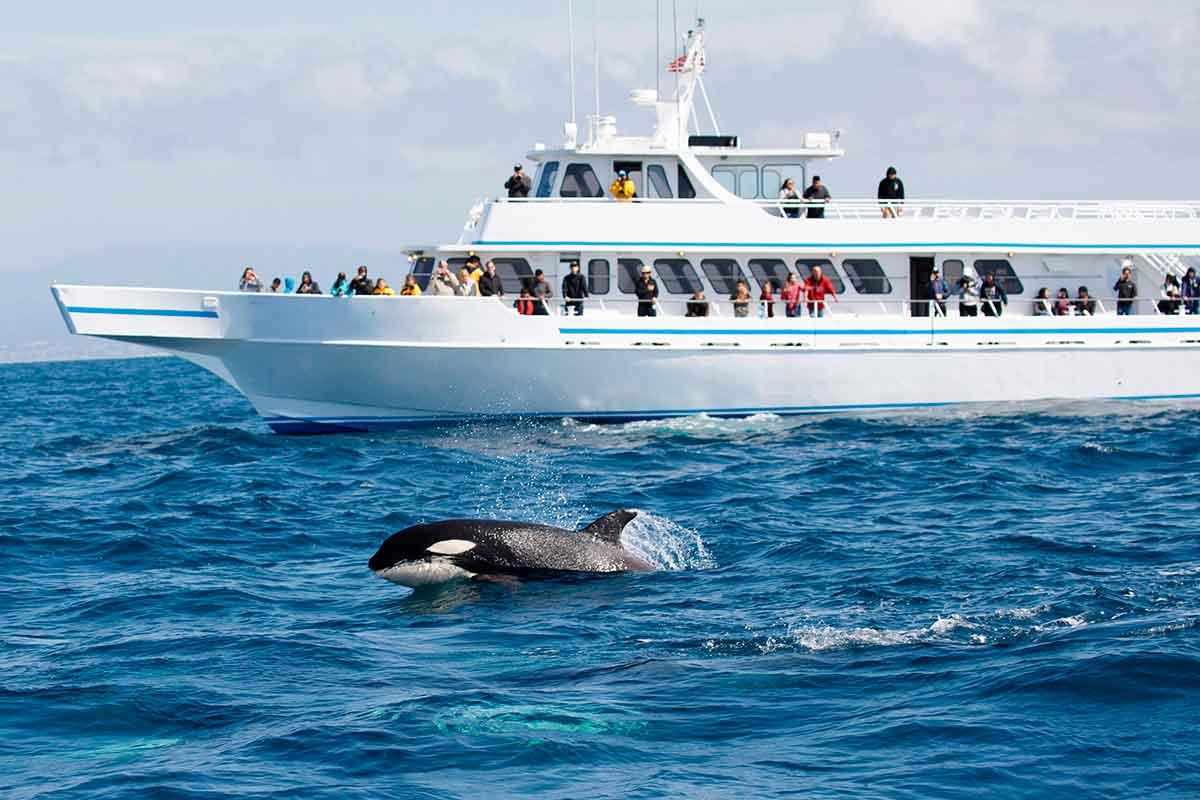 caça-baleia