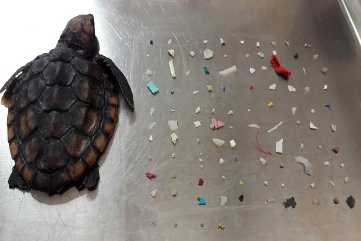 plastico-tartaruga