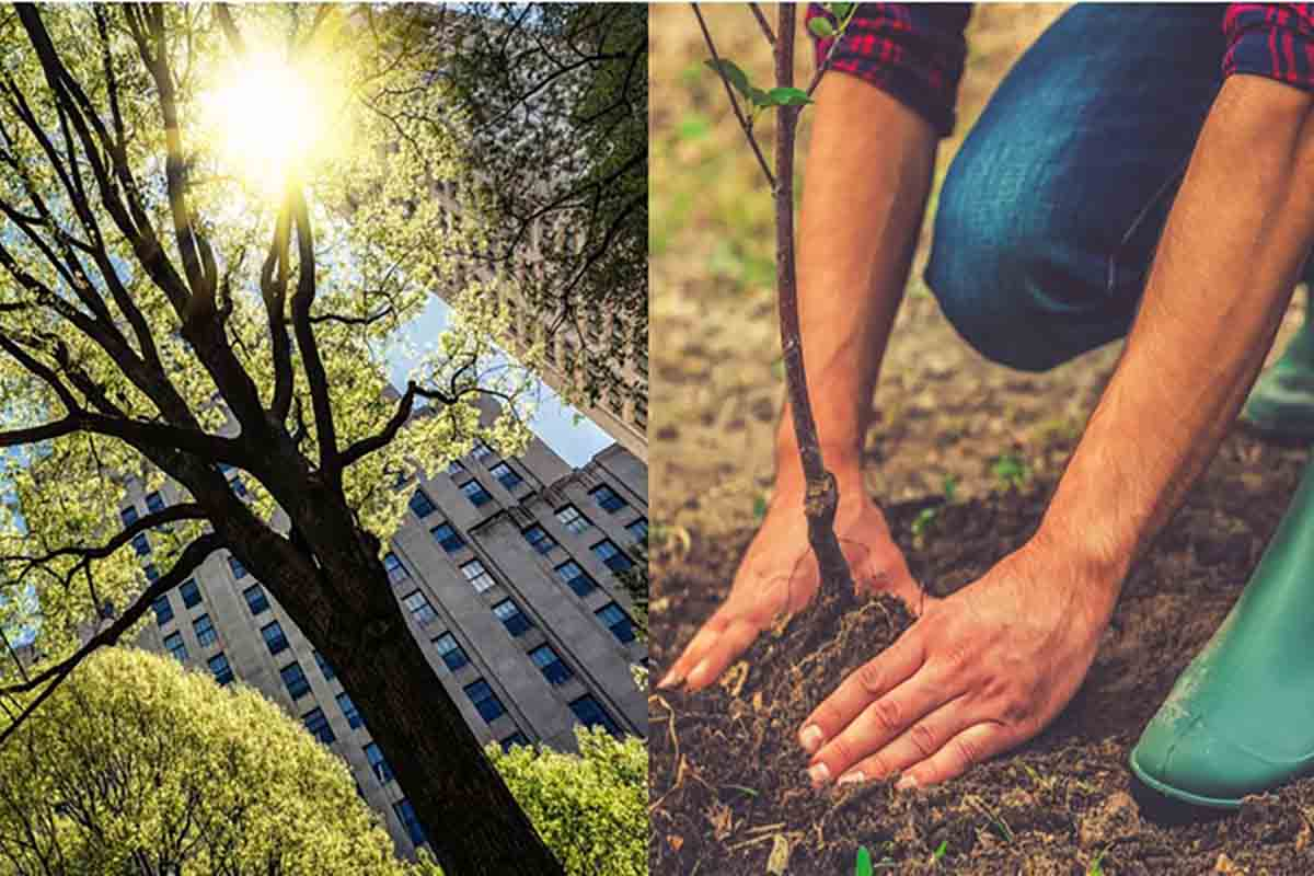 plantar árvores