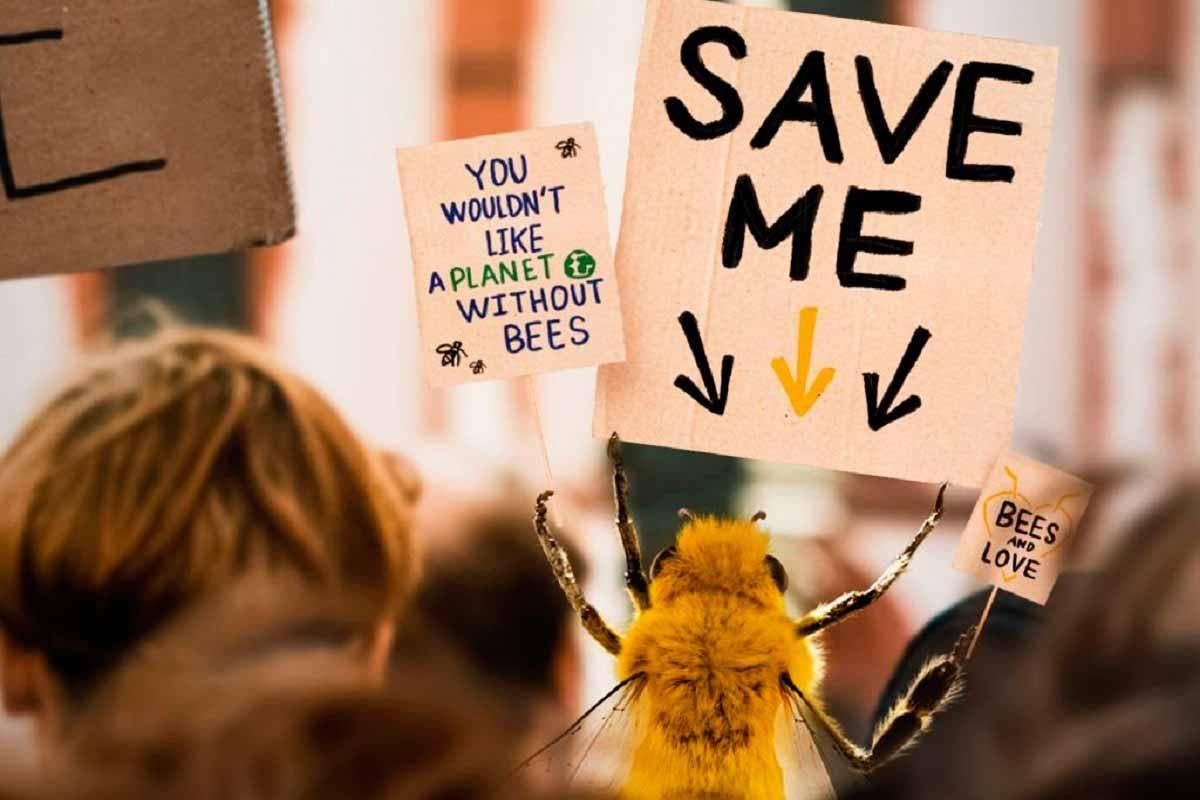 Bee influencer