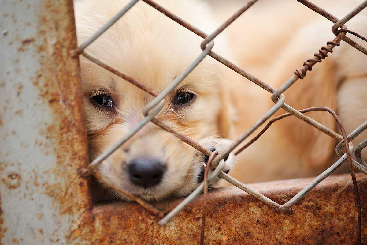 Tortura animal