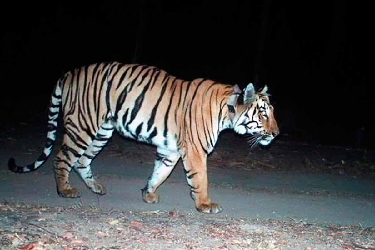 Percurso Tigre