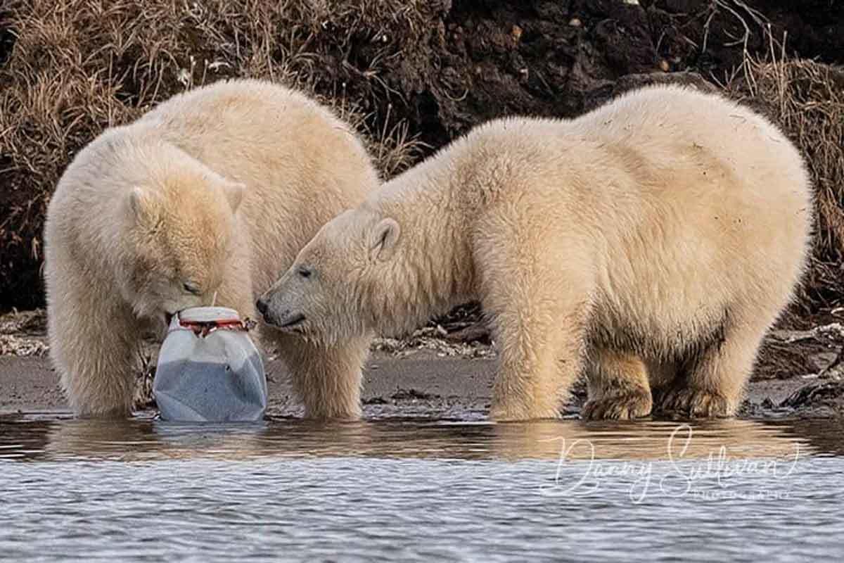 ursos-plástico