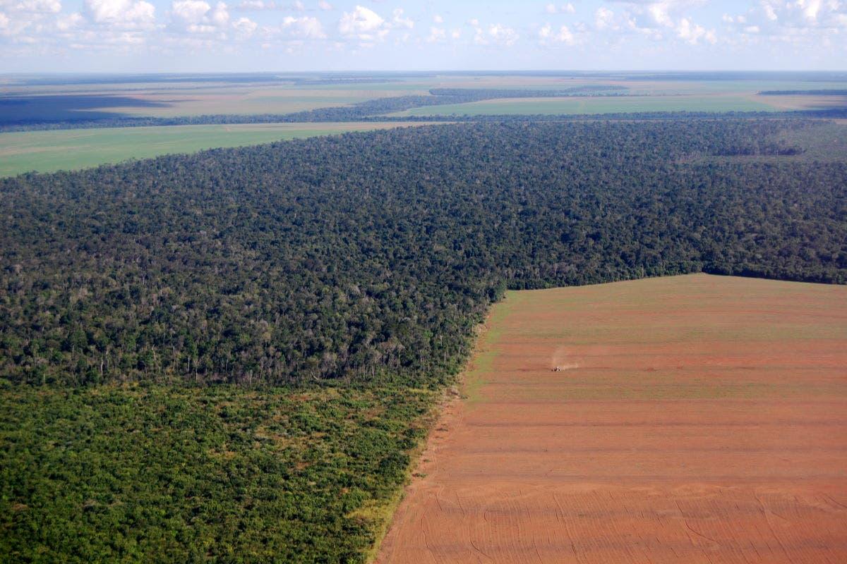 brasil-biodiversidade