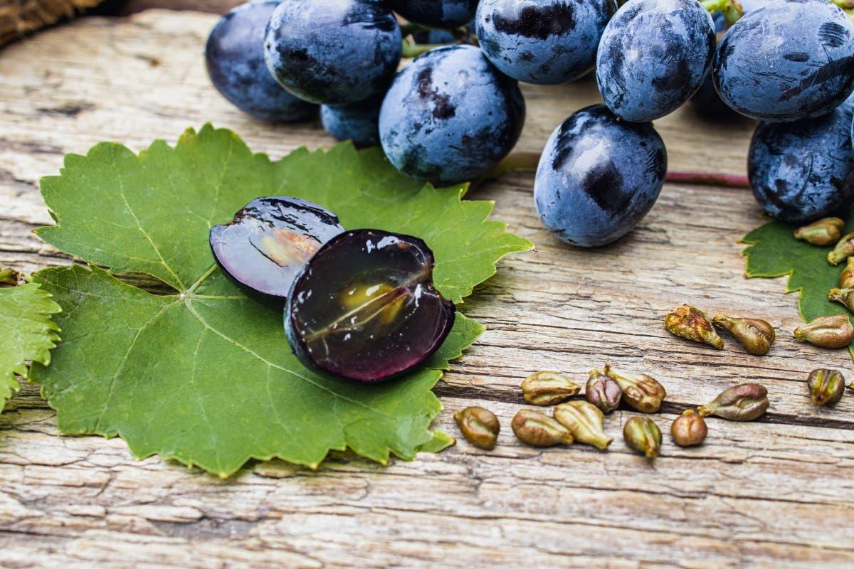 sementes-uva