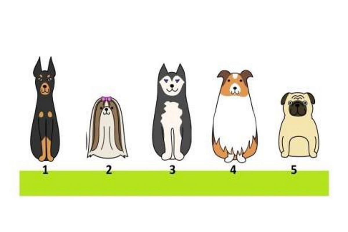 teste-cachorro
