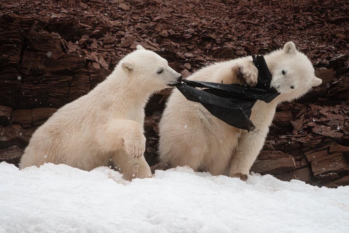 urso-polar-plasticos