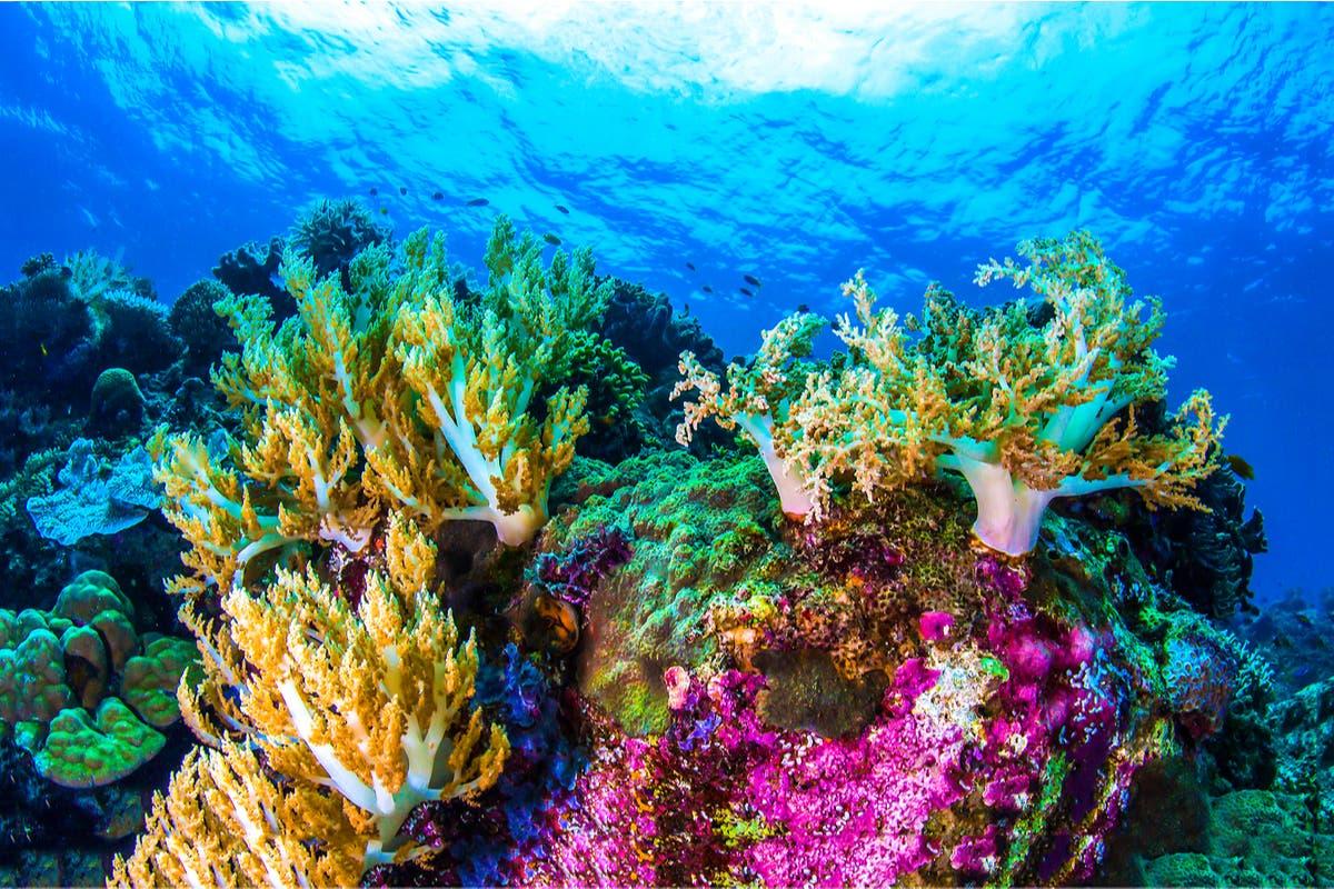 barreira-corais