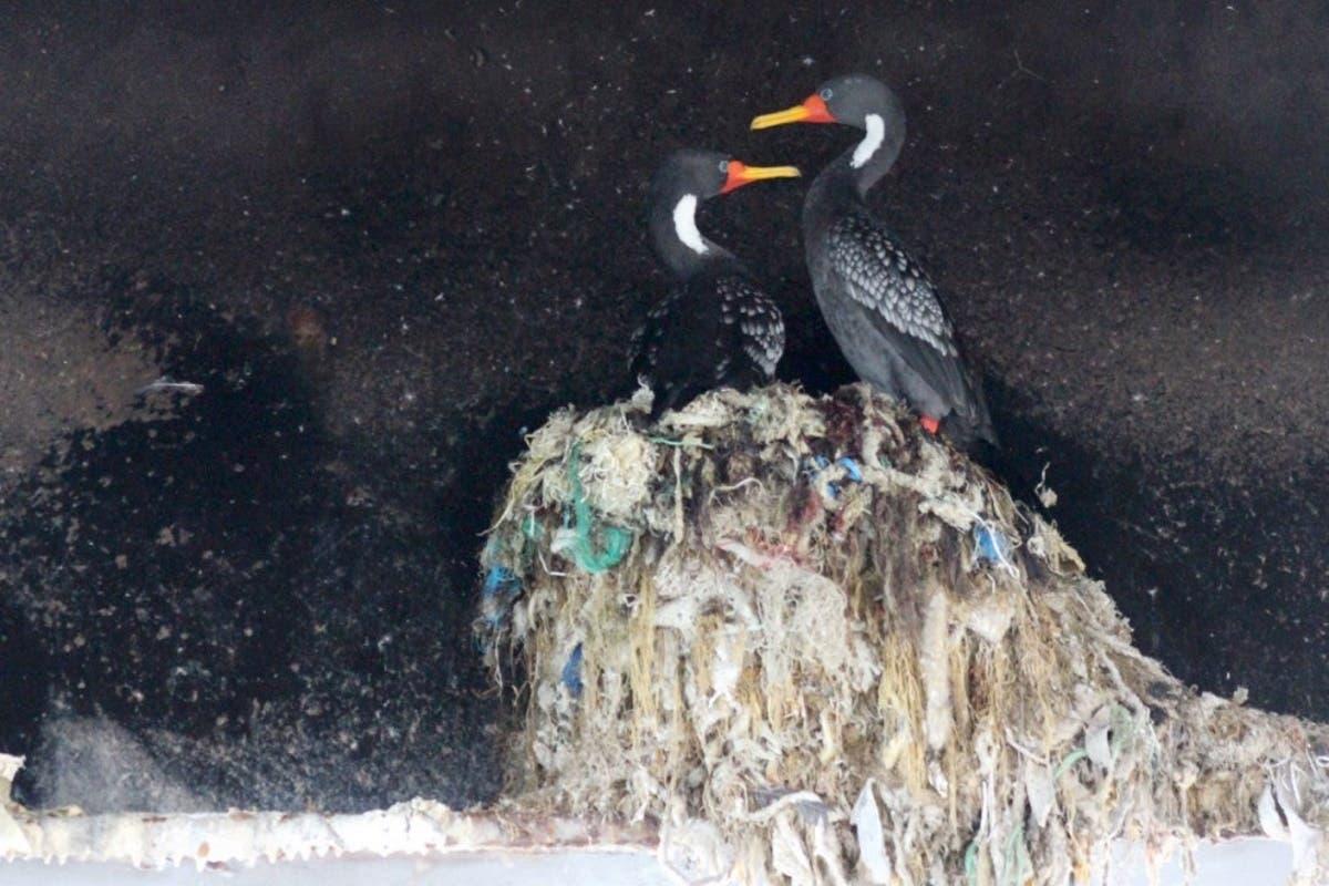 chile-ninhos-plasticos