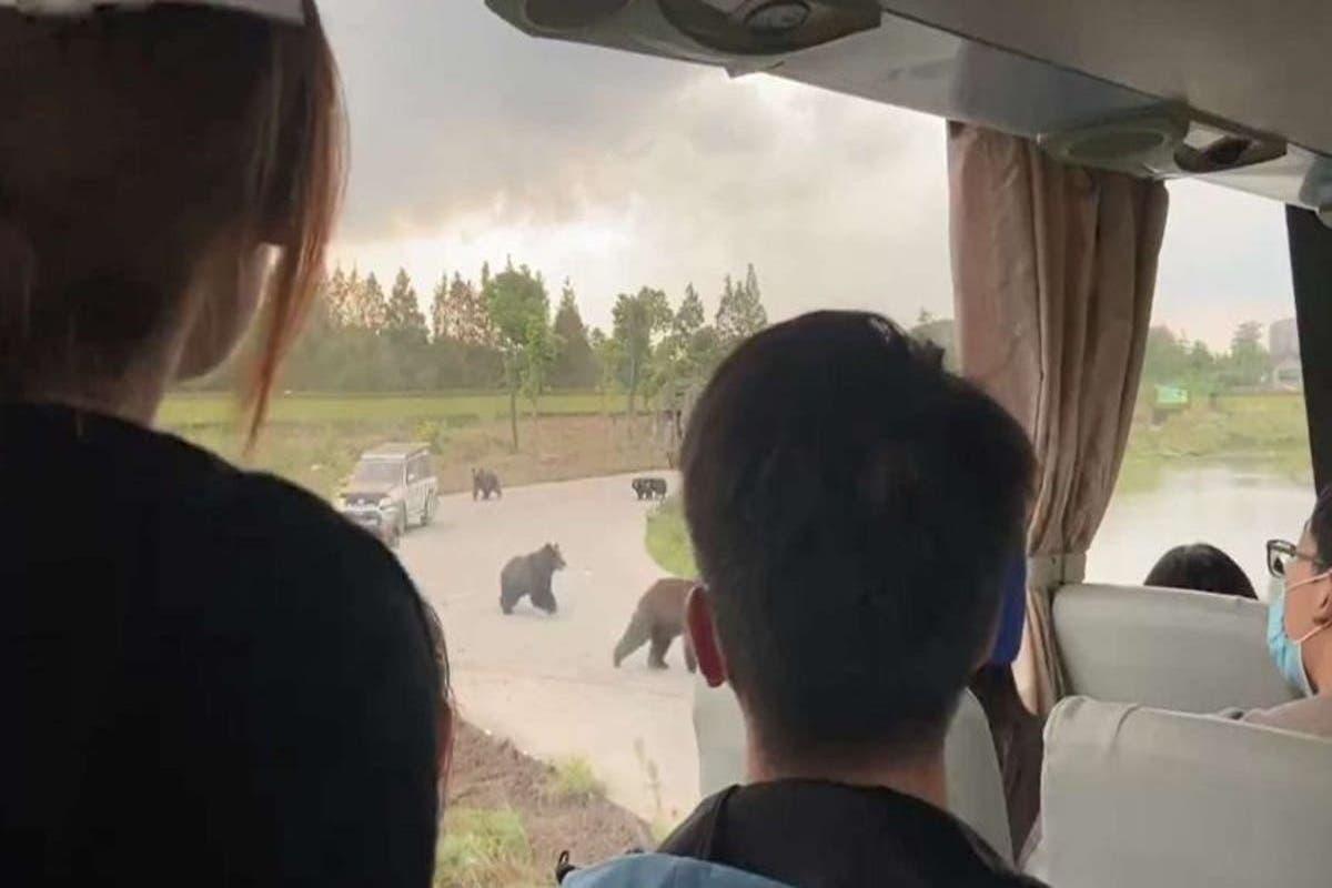 china-zoo-ursos