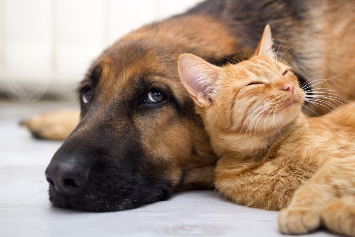 gato-cachorro-covid